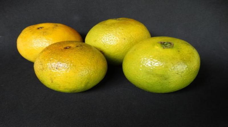 laranja 1 2 19