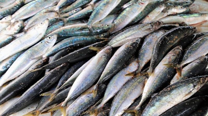 sardinha sardinha 9 2 19
