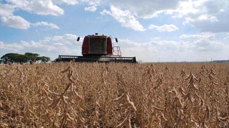 soja colheita 25 2