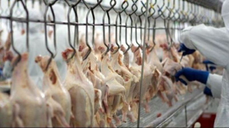 carne de frango-agencia-brasil 1 3 19