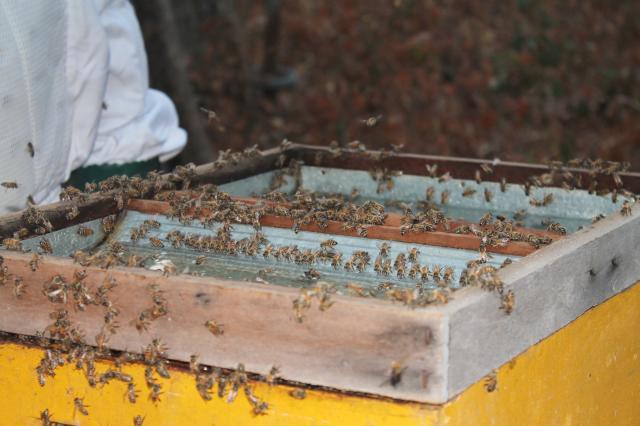 abelhas 28 4 maria eugenia riberiro embrapa