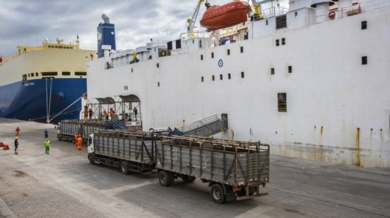 exportacao gado vivo porto rio grande _ FERNANDO DIAS_SEAPDR