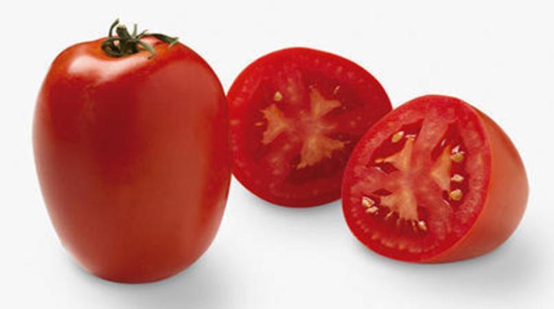 tomate 10 4 19 leandro lobo embrapa