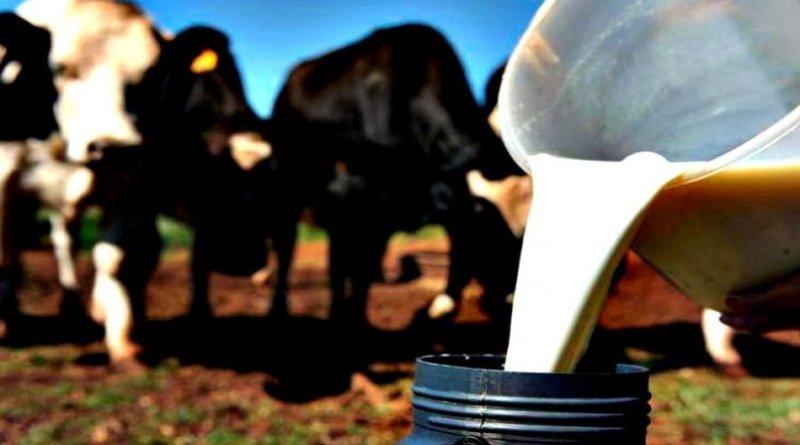 Preço do leite ao produtor está em alta; custo de produção também subiu