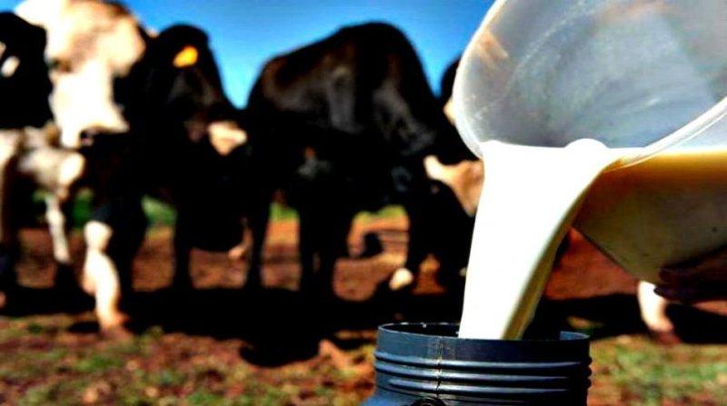 leite balde governo de rondonia 21 5 19