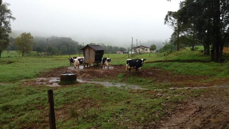 rebanho leite pastagem jardinopolis sc