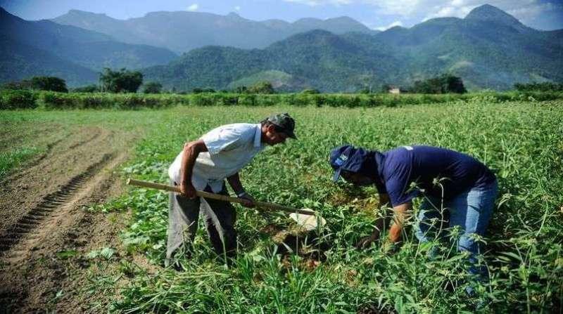 agricultura familiar 11 3 19 agencia brasil