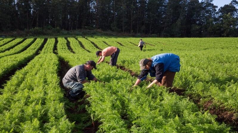 agricultura familiar MC trabalhador na lavoura agencia brasil 8 7 19