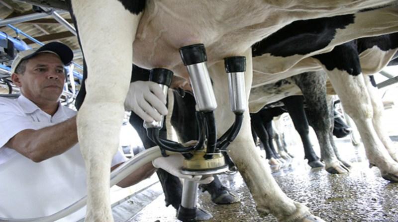 leite produtor embrapa