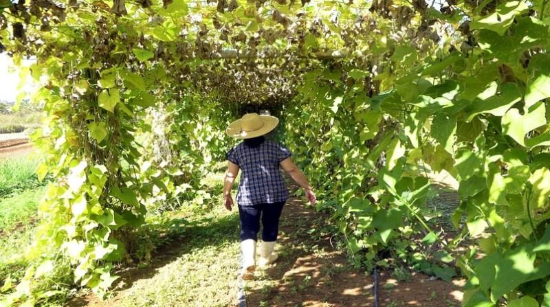produtora rural parreiral df joel rodrigues ag brasilia
