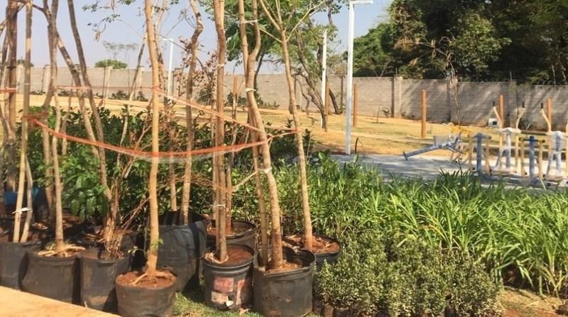 arvores plantio goiania -viveiro-ParqVille-Pinheiros