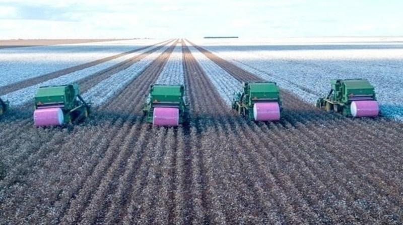 algodao plantacao maquina rolo rosa