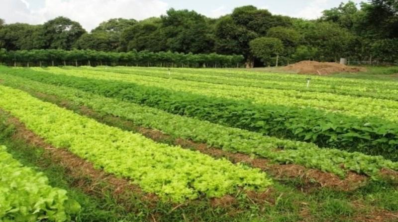 horta agricultura organica embrapa