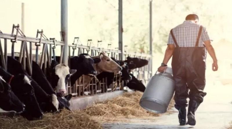 produtor de leite prinrt screen divulgacao