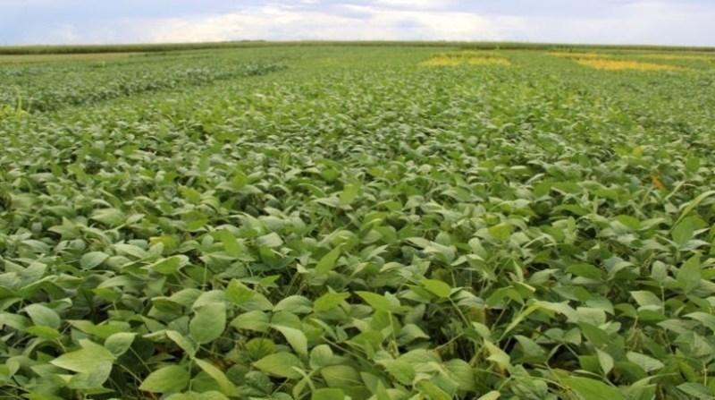 soja plantacao 18 10 carlos lasaro embrapa
