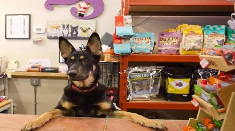 pet shop youtube