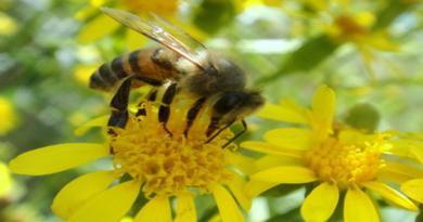 Comissão Europeia bane pesticida da Bayer associado a danos em abelhas