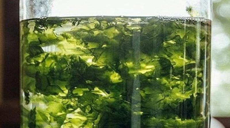 alga marinha dalga agricultura