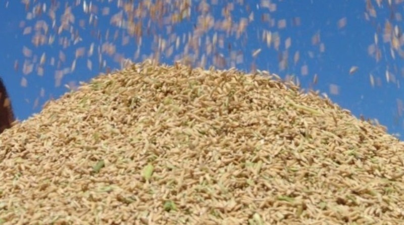 arroz irga mc 2 16 1 2020
