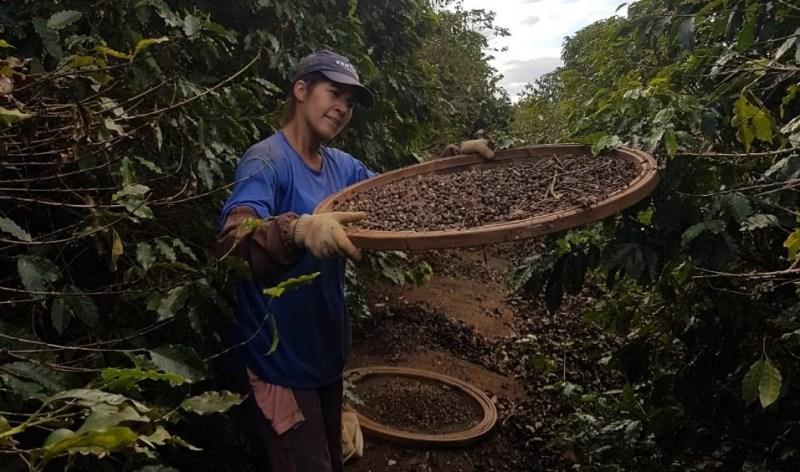 cafeicultora 03 propriedade adalgiza mg divulgacao