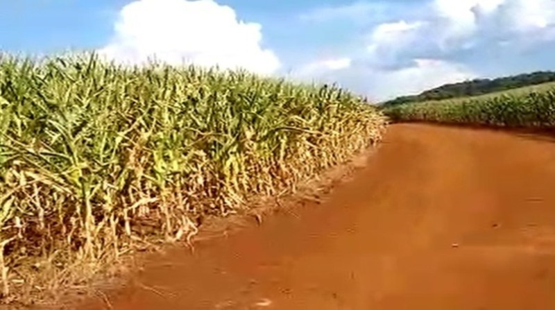milho seca rs