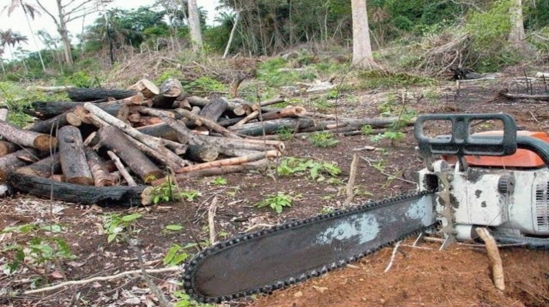 amazonia desmatamento motosserra agencia brasil