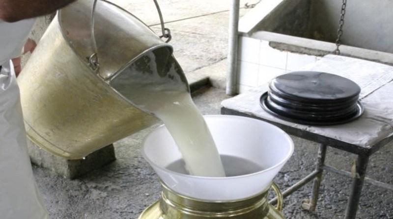 leite balde MC alcides obuko filho embrapa