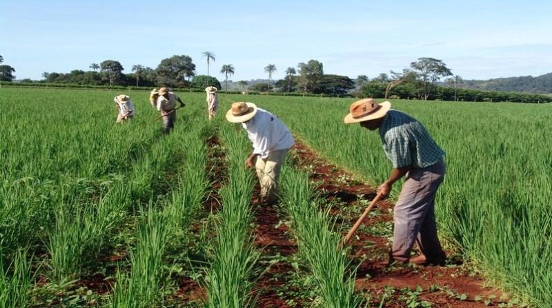 agricultura familiar goias emater go