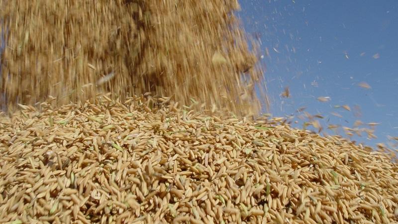 arroz irga gov rs divulgacao 10 02 2020