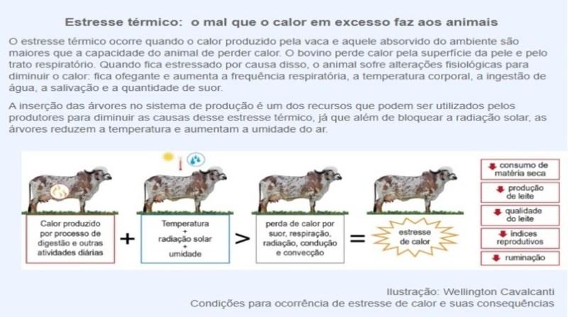 arte 2 vacas que pastejam embrapa