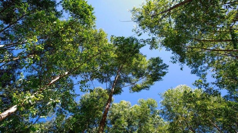 arvores florestas Sistema CNA - Wenderson Araujo