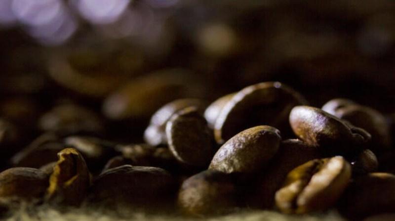 cafe graos paulo lanzetta embrapa 9 10 19