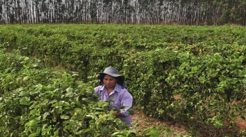 mulheres campo agencia brasilia tony winston 17 3 2020