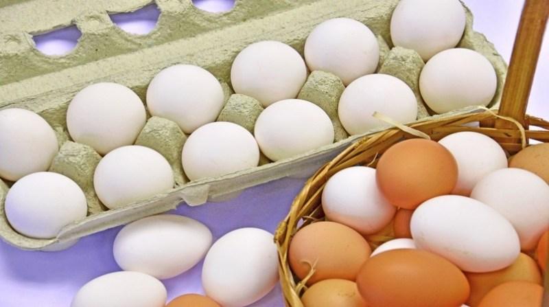 ovos brancos vermelho embrapa 17 02 2020
