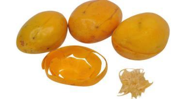 Alimentos à base de cajá-manga têm propriedades nutricionais e funcionais