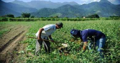 Seminário virtual discute venda de terras para estrangeiros