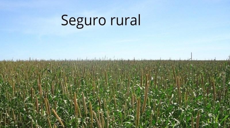 Mapa: Contratação seguro rural cresce mais que o dobro em 2020