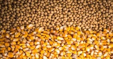 Embrapa: Agro brasileiro alimenta 800 milhões de pessoas