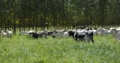 Projeto de lei ameaça comércio de gado vivo do Brasil para o mercado externo