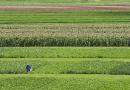 Embrapa apresenta estratégias para reduzir falta de água na soja