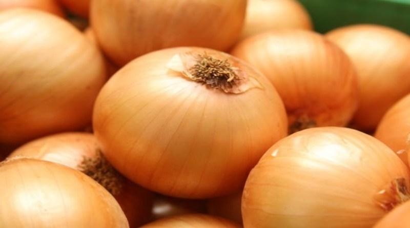 Chuvas afetam colheita de cebola; preços sobem