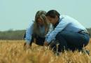 Projeto reforça importância da criação de bovinos a pasto