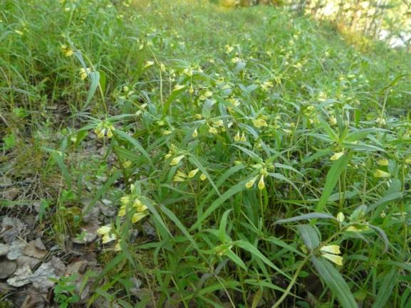 фото сорняков растущих на кислых почвах этом