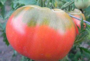 Томат Семейный: отзывы, фото, урожайность