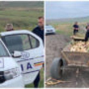 Hoți de porumb prinși de polițiști în 30 de minute! Acțiunea – filmată în câmp de fermierul păgubit!