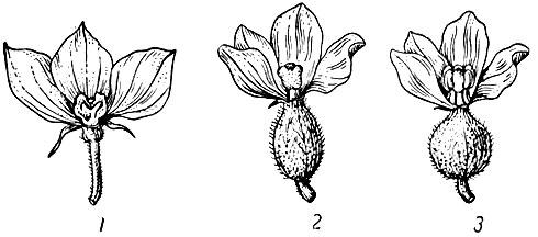 Биология цветения и оплодотворения 1959 Бахчеводство