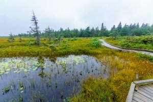 Cape Breton bog and hiking trail