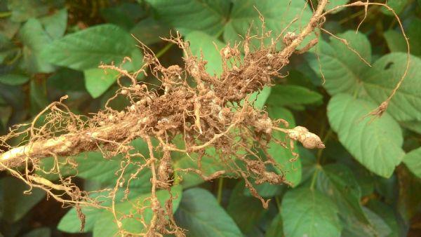 O que são nematóides?