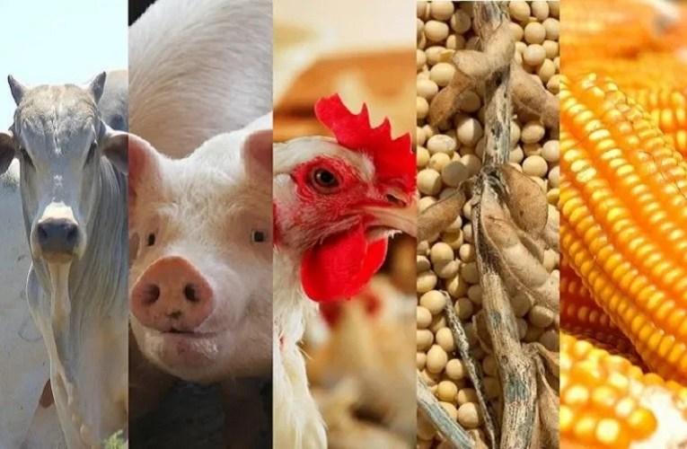 Cepea: Indicador cotação suínos, boi, frango, farelo de soja e milho