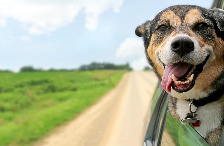Seu cachorro anda estressado? Saiba identificar e tratar
